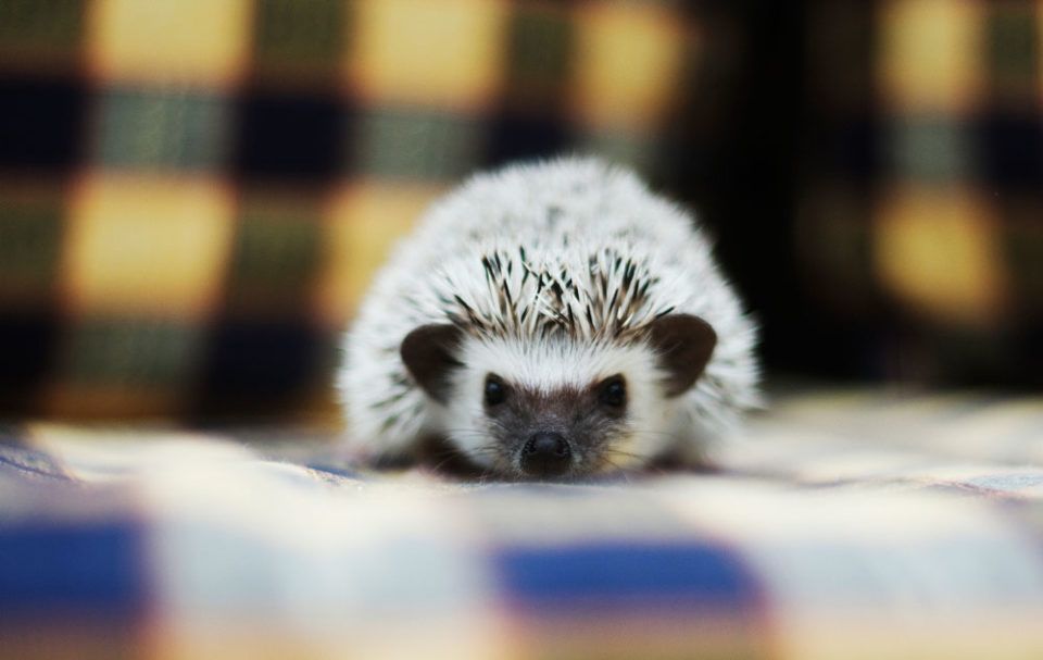 Facts About Exotic Pets You Can Own Because Calgary Pet Expo Is Coming Avenue Calgary