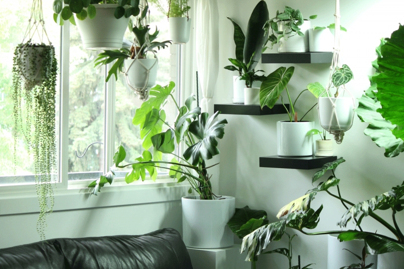 Inside Jesse Gleeson S Apartment That Is Full Of Plants