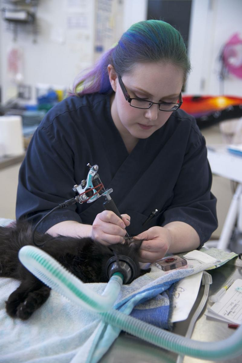 Inside the Calgary Humane Society | Avenue Calgary