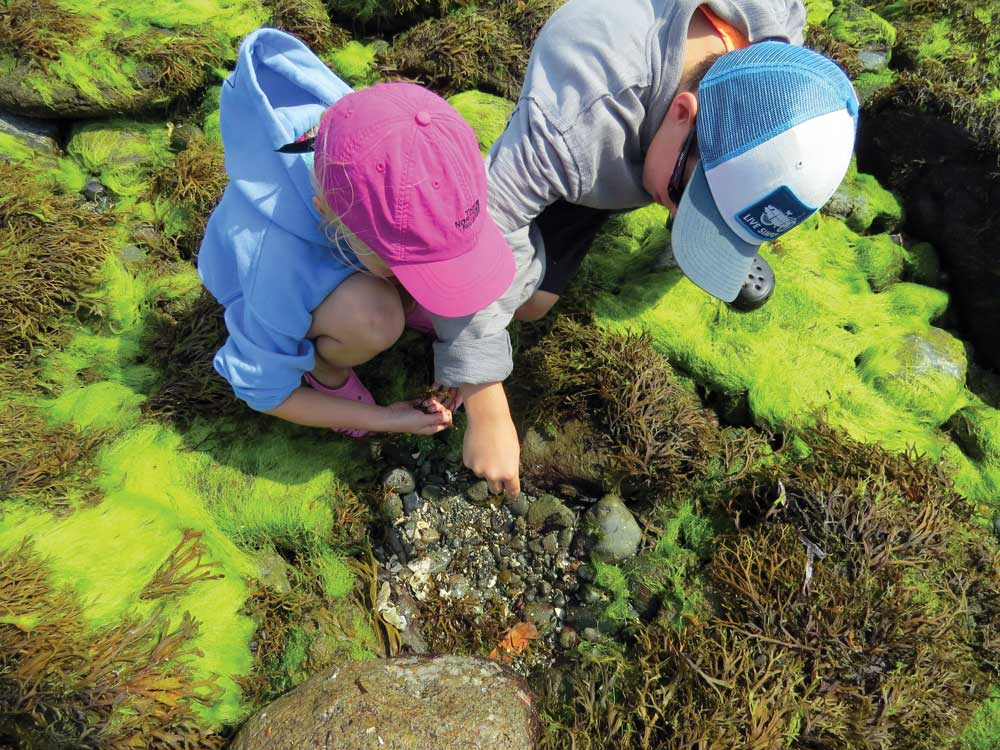Salish Sea Tidepool Tour.